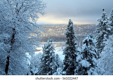 Early morning light captures  winter scene with snow-laden pines in foreground and lake against mountains in background.