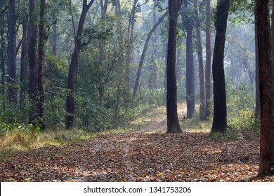 Early morning light filtering through the trees in the Chitwan National Park in Nepal