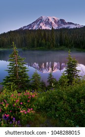 Early morning light on Mt. Rainier shows spring flowers and morning mist on Reflection Lake at Mt Rainier National Park in Washington state, USA