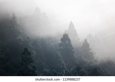 Early morning light rays shine through fog illuminating treetops