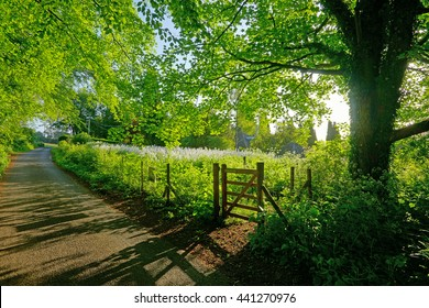 Early morning light and shadow in a Cotswold country lane in Summer near to Painswick, The Cotswolds, Gloucestershire, England, UK