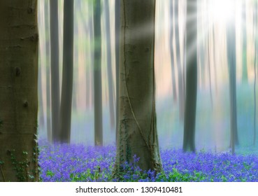 early morning light spring forest with violet blue bells in the foggy mist. These wild flowers cover the floor of the woods with a carpet of color.. Bluebells are beautiful wildflowers. Motion blur