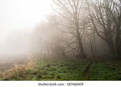 Early morning mist in Dorset