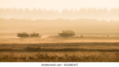 Early morning mist in a layered landscape
