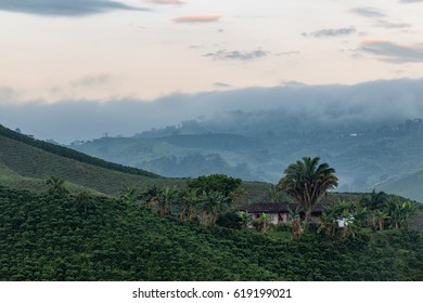 Early morning mist lifts in the coffee triangle near Manizales, Colombia.