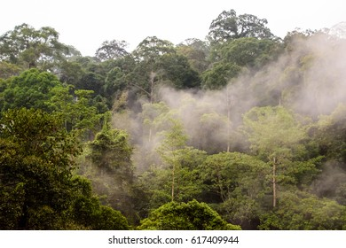 Early morning mist over the ranforest in Borneo