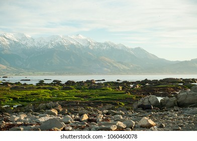 It is an early morning photo taken near Kaikoura, New Zealand. The white and blue of the sea and the green of the seaweed on the mountain seem to express all the colors of nature. This picture can be