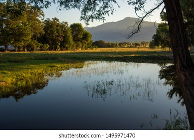 early morning pond in field with trees and mountain