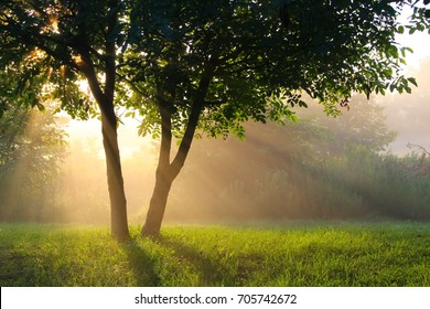 Early morning rays of sunlight spread mysteriously behind a pair of trees on a grassland with bushes in the background