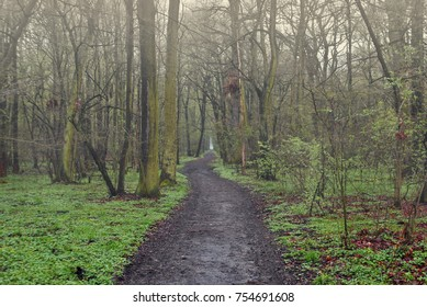 Early morning rising fog above forest muddy path. Green grass and moss, moist in air. Trees and mist, gloomy landscape, mysterious scenery, scary ghostly view. Mud on road leading through forest.