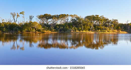 Early morning scene at Big Talbot Island State Park near downtown Jacksonville, Florida