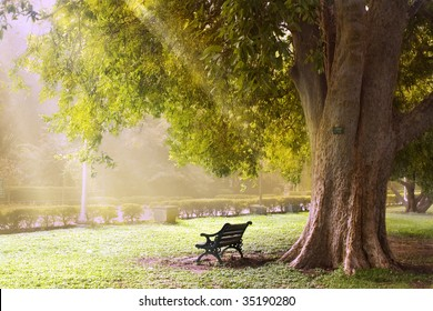Early morning shower of light on an old bench under a tree.