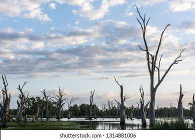 Early morning sky over Backwater on the River Murray South Australia, important environment for native fish and birds, reflected sky with reeds and ghost gums. Landscape background.