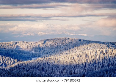 Early morning snow covered black forest warmed up by the sun rays The sky is opening up and the fir trees are covered with snow after the storm the day before. In the background you can see the Vosges