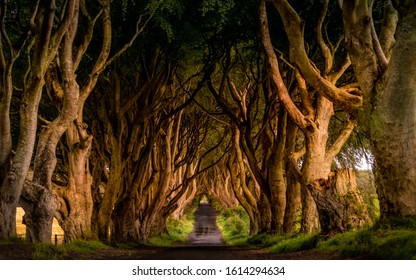 Early morning in spring with worm sunlight at The Dark Hedges, County Antrim, Northern Ireland. Filming location of popular TV show, Kingsroad, Game of Thrones