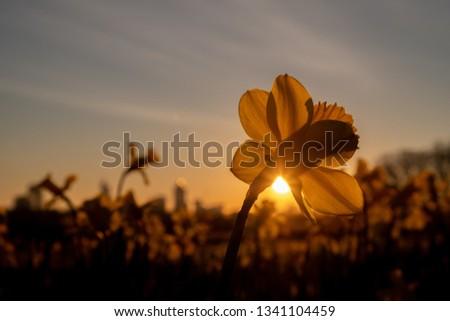 early-morning-sun-peeks-beneath-450w-134