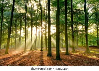 Early morning sun rays shining through an autumn forest