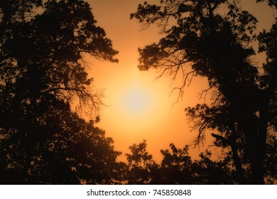 Early morning sun shining through trees in heavy fog, in hues of deep orange