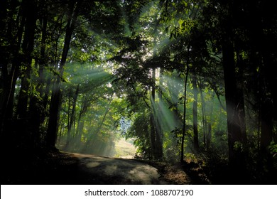 Early morning sunlight filters through the forest canopy at Shelley Lake Park in Raleigh North Carolina, Triangle area, Wake County. Rays of light in the mist creates a dazzling spectacle.