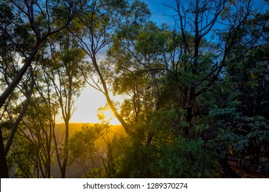 Early morning sunlight shining through trees. Sunrise over the hills covered by forest in the Blue Mountains national park in Australia.