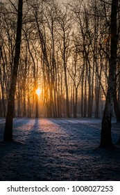 An early morning sunrise during winter in a frozen cold and snowy park. Light rays, frost on the grass and on the leaves, warm and cold color tone.