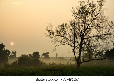 Early morning sunrise over frosty tea fields with leafless trees