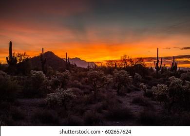 An early morning sunrise in Usery Mountain Regional Park in Arizona, USA