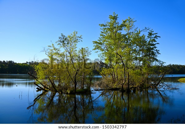 early-morning-view-lake-trees-600w-15033