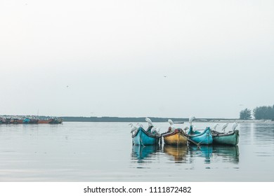 Early morning view of white cranes resting on fishing boats in Kannur harbour.