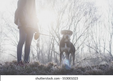 Early morning walk with dog