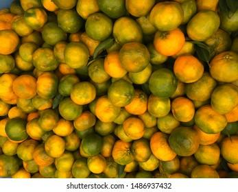 Early season mandarins harvest in Sunraysia