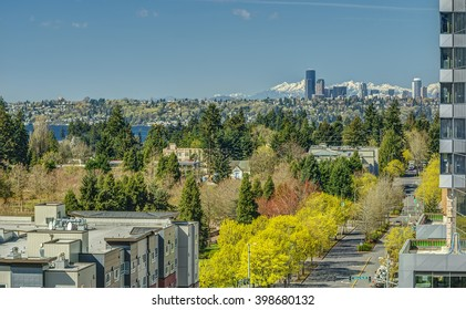 Early Spring Blooms on the Streets of Bellevue, Washington with the Seattle Skyline and Olympic Mountains in the Distance