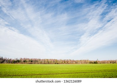 Early spring. Country landscape. A view of the green agricultural field against clear blue sky and white clouds. Forest in the background. Poland