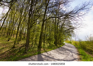 Early spring in countryside. Asphalt road leading below trees. Only a few green leaves, first ones in the spring.