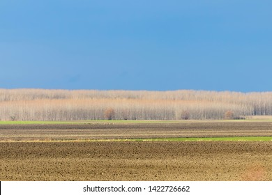 Early spring countryside landscape, Early spring sunny day in a field