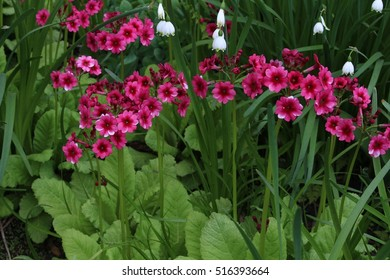 Early spring flowers