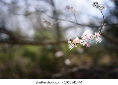 Early spring flowers and blossoms.