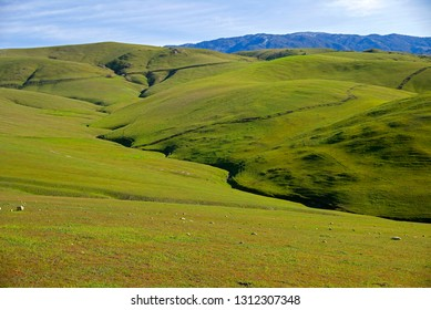Early spring in the foothills of the Sierra Nevada Range and this California ranch land turns temporarily green.