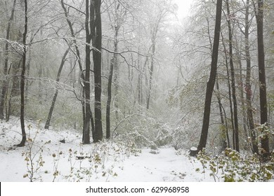Early spring forest during snowfall. - Shutterstock ID 629968958