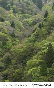 Early spring mountain