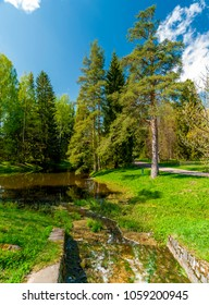 Early Spring in the park, Pine and fir trees, alley and a pond