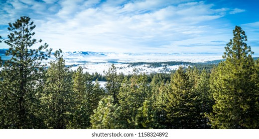 An early spring photo of the Mission Valley near St Ignatius Montana.  Beautiful blue skies visible between a couple Ponderosa Pine Trees.