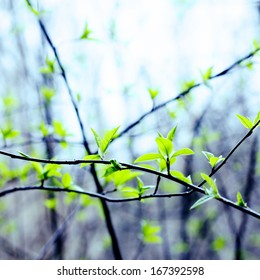 Early spring shoots with tiny leaves on fuzzy forest light lilac background
