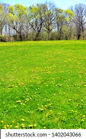 Early spring weeds in park showing their yellow against the budding trees in the distance in a vertical view.