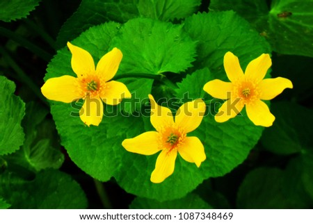 Early Spring Yellow Flowers Stock Photo Edit Now 1087348469