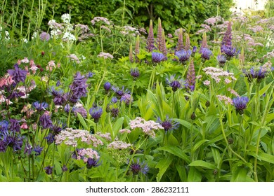 early summer garden border in cool shades of blue, purple, pink and white