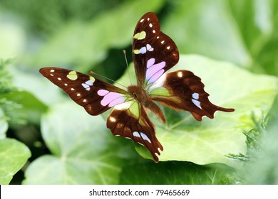 In the early summer garden butterflies appeared in the wonderful colors.