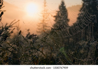 Early summer morning in the meadow. A web in drops of dew in the rays of the sun as beads or decoration. Cobweb at sunrise. Bright transparent and glittering blurred natural background. Rural scenery