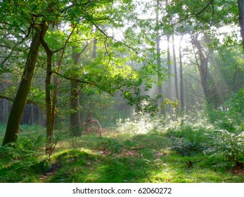 Early summer morning sun shining through the trees in the forest (HDR)