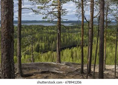 Early summer mountain landscape